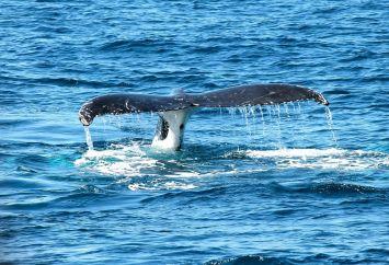 ETH balinaları